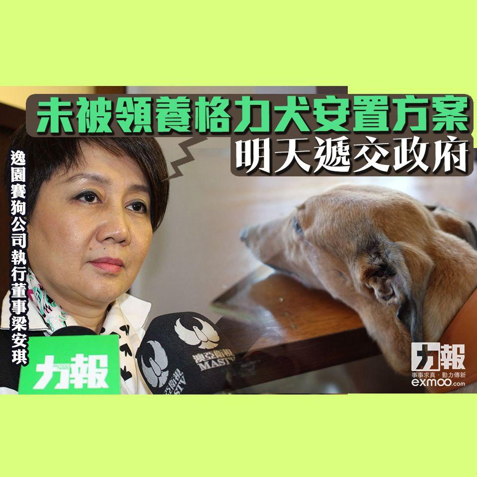 梁安琪:未被領養格力犬安置方案明天遞交政府