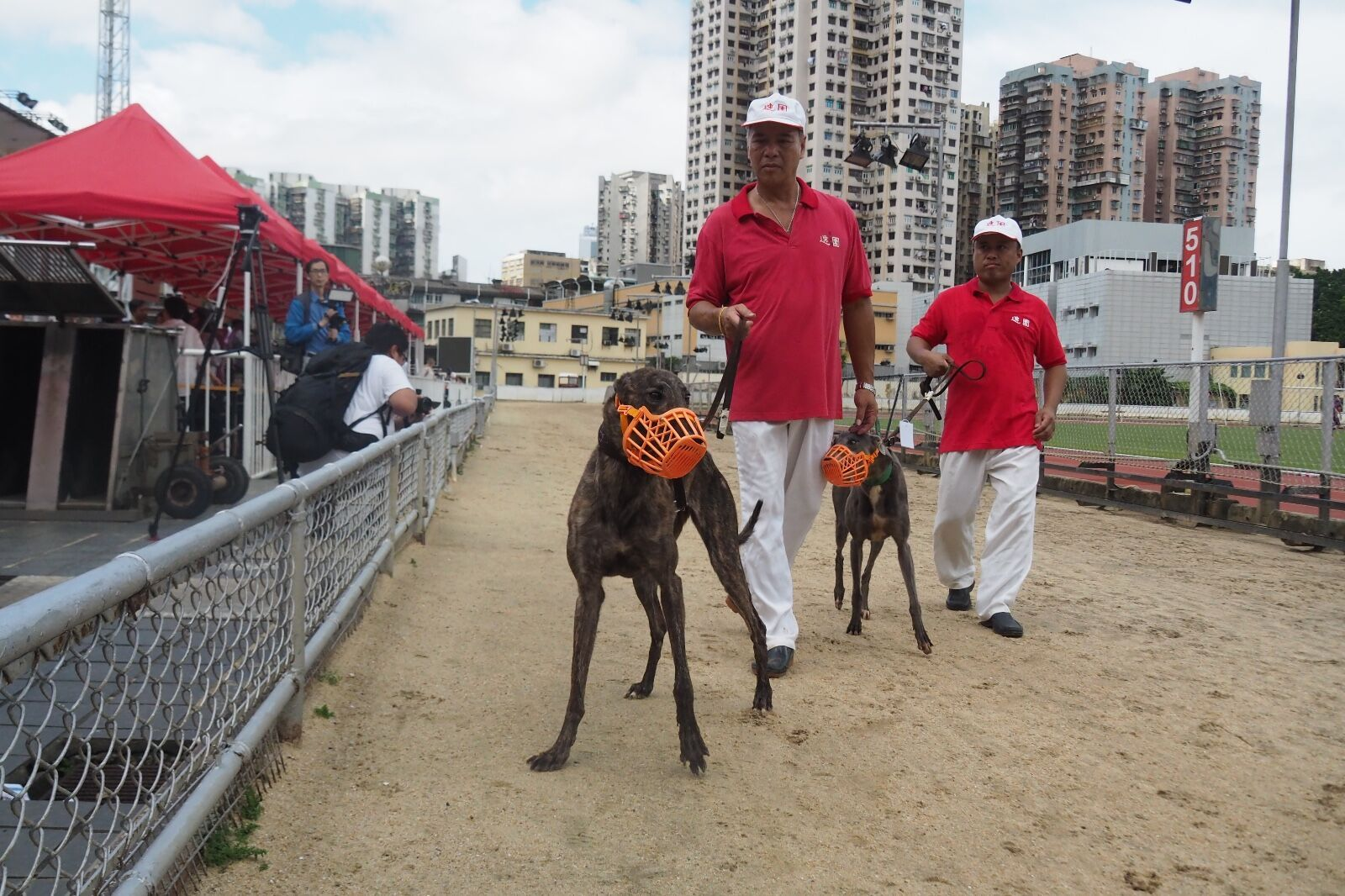 格力犬可申請特別許可證入境