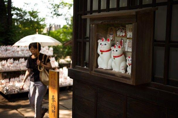 【國際貓日】遊客聚東京豪德寺「打卡」