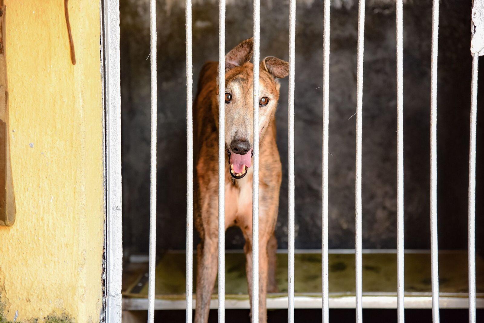 民署強調狗場內格力犬得到適切照顧