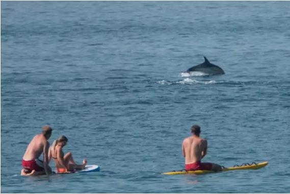 只因一隻海豚發情性騷擾泳客