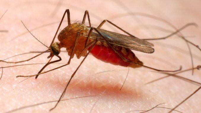 本澳夫婦同遊非洲先後確診瘧疾