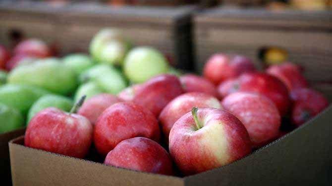 藏針事件增至20宗 蘋果也中招