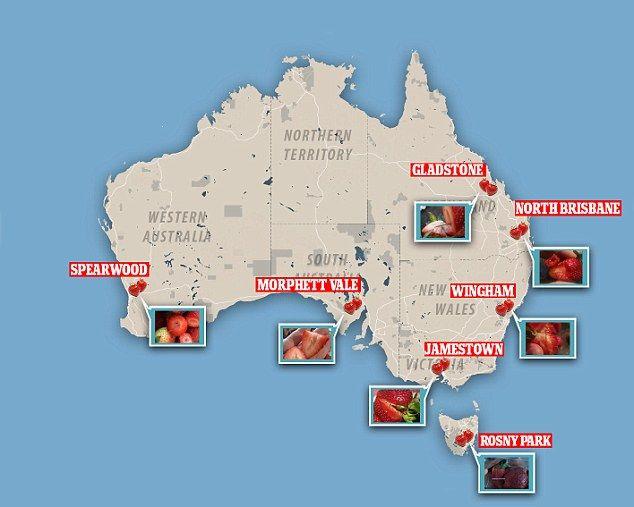 有片!【生果藏針】澳洲輪到芒果出事