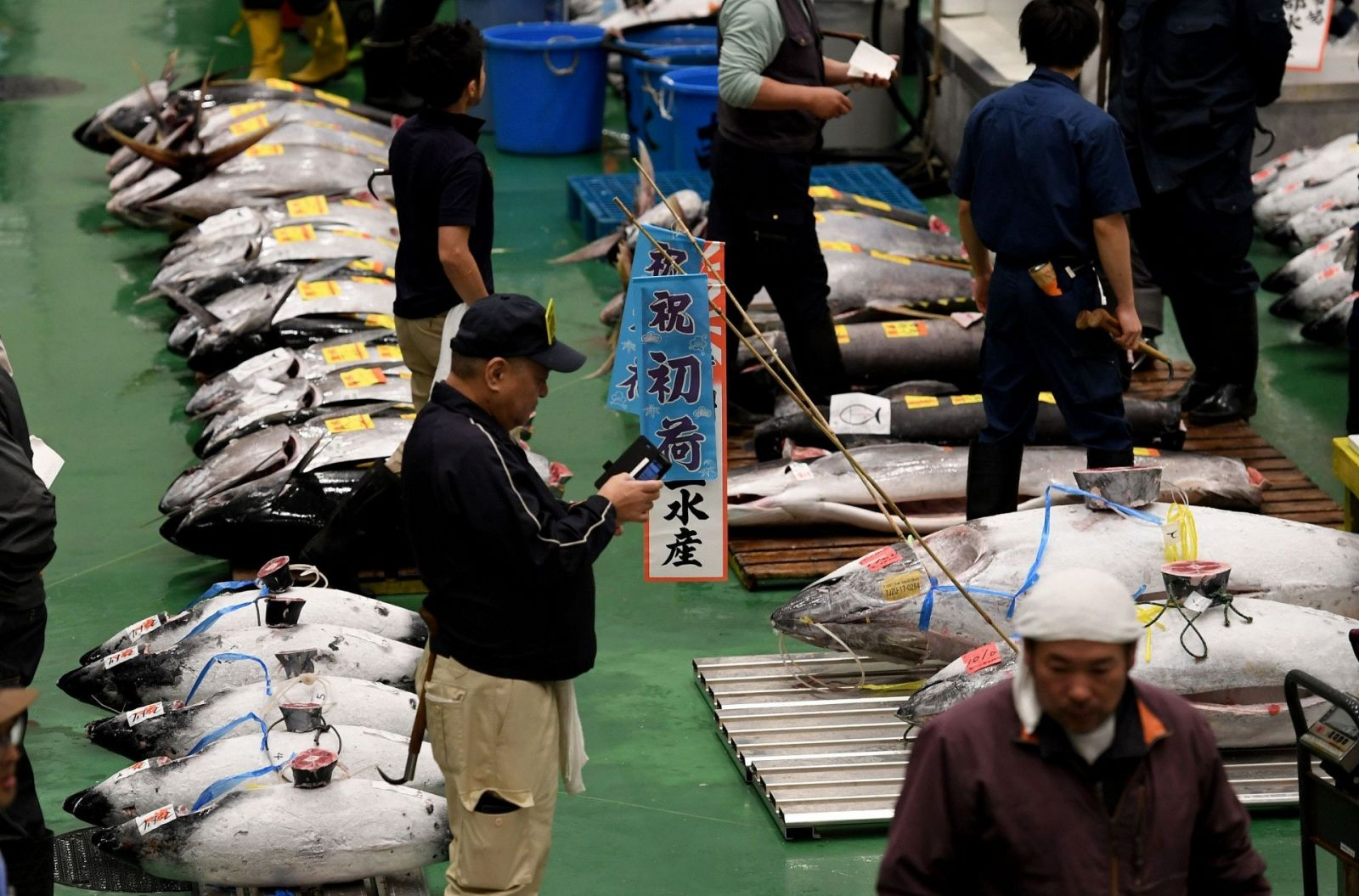 舉行首次吞拿魚拍賣