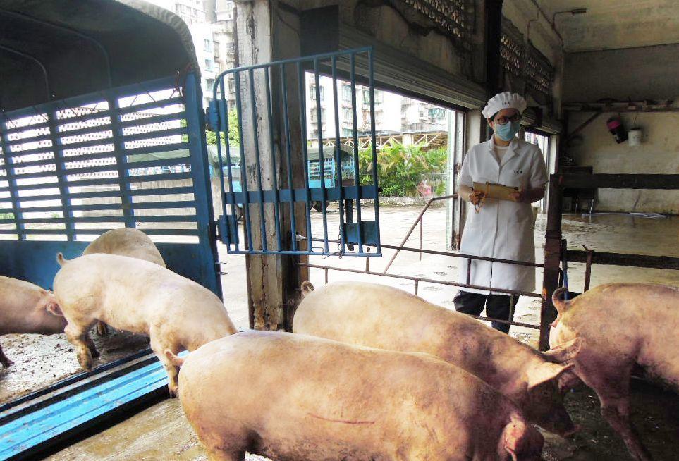 市政署籲市民勿食不明來歷豬肉