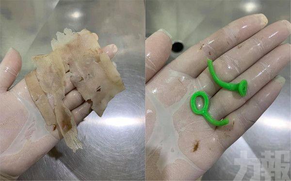 獸醫呼籲勿買塑膠給毛孩