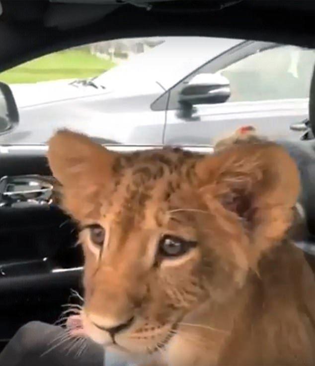 交通警:無違法不能制止
