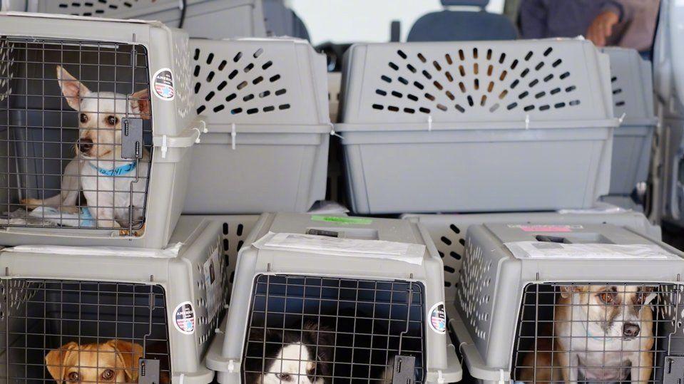 25類貓狗禁上機