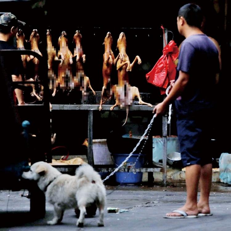 變態食客攜寵物狗吃狗肉