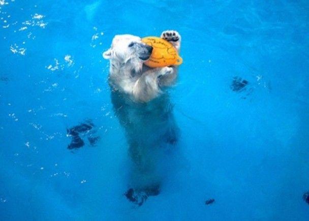 北極熊自學掟波解悶