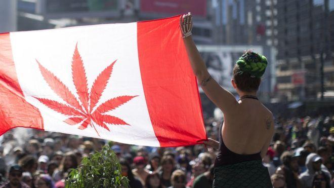 加拿大參議院通過消遣大麻合法化
