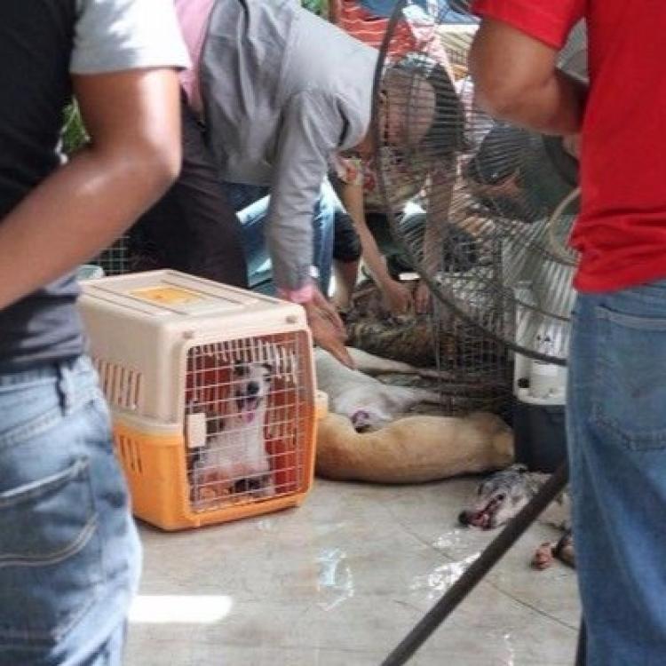 30隻狗狗慘被監生焗死