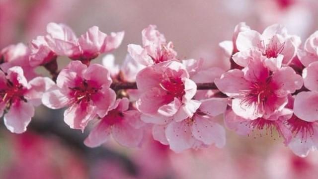 雙春兼閏月啱晒桃花