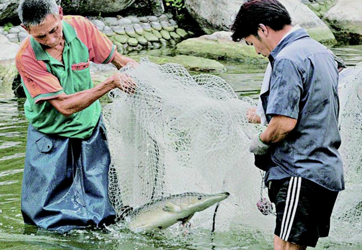 15條三呎長福鱷大鬧香港
