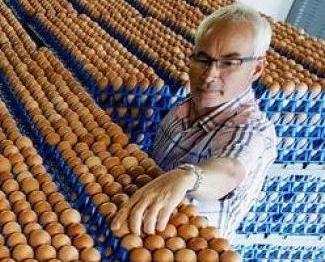本澳今年無入口荷蘭雞蛋