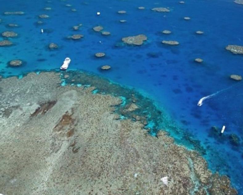 澳洲大堡礁日本遊客溺亡