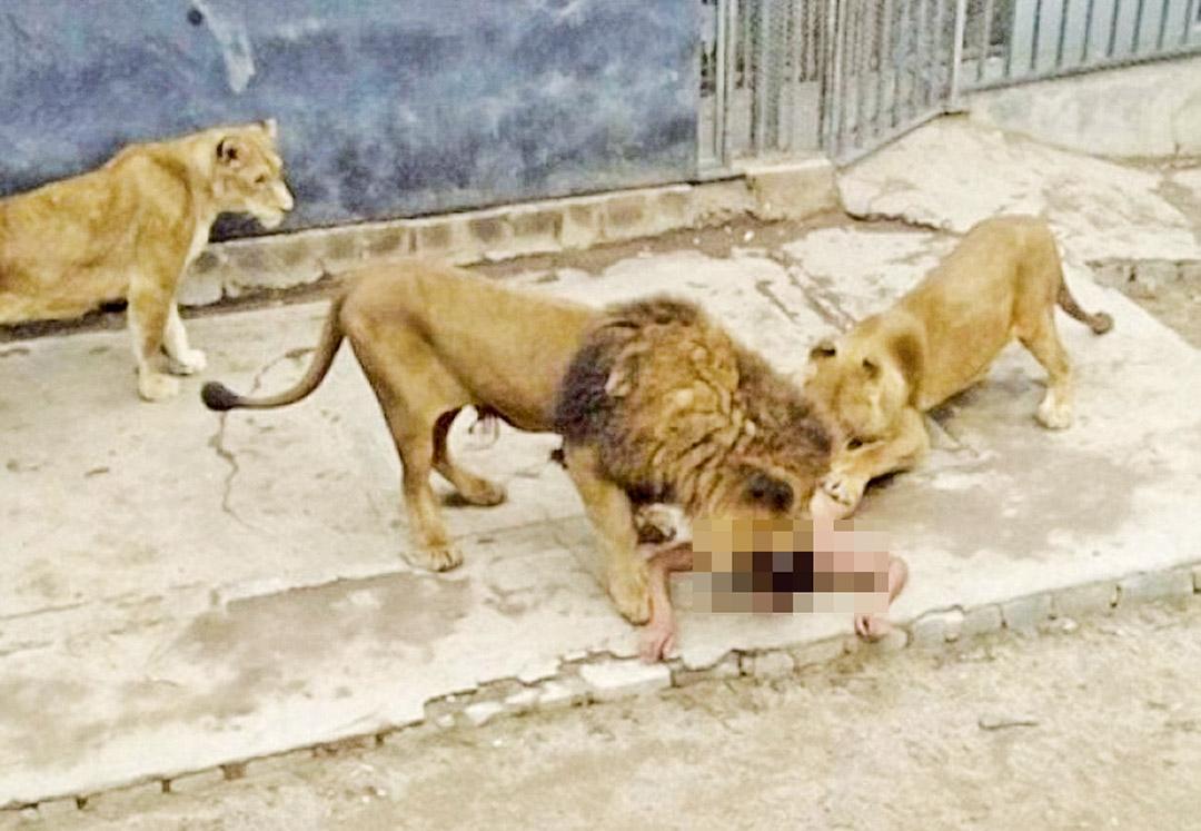 園方殺獅救人惹爭議