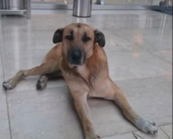 流浪狗狗死守酒店半年獲收養