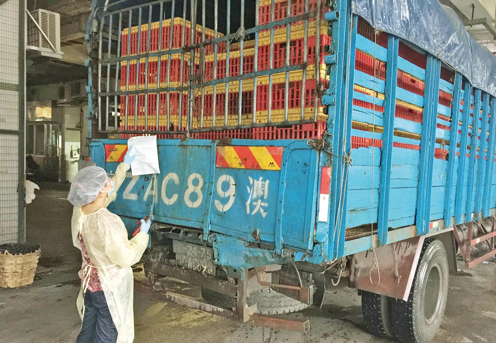 首批7,500隻活雞今日應市