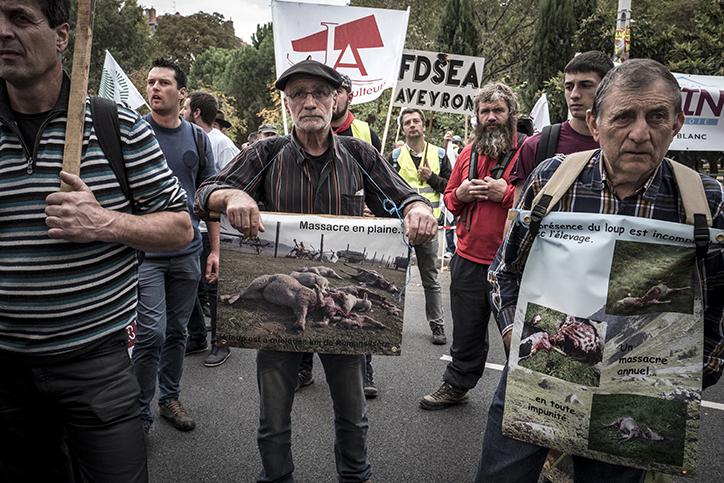 羊群攻陷法國里昂