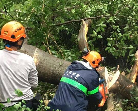 發生樹木斷枝及大石滑落