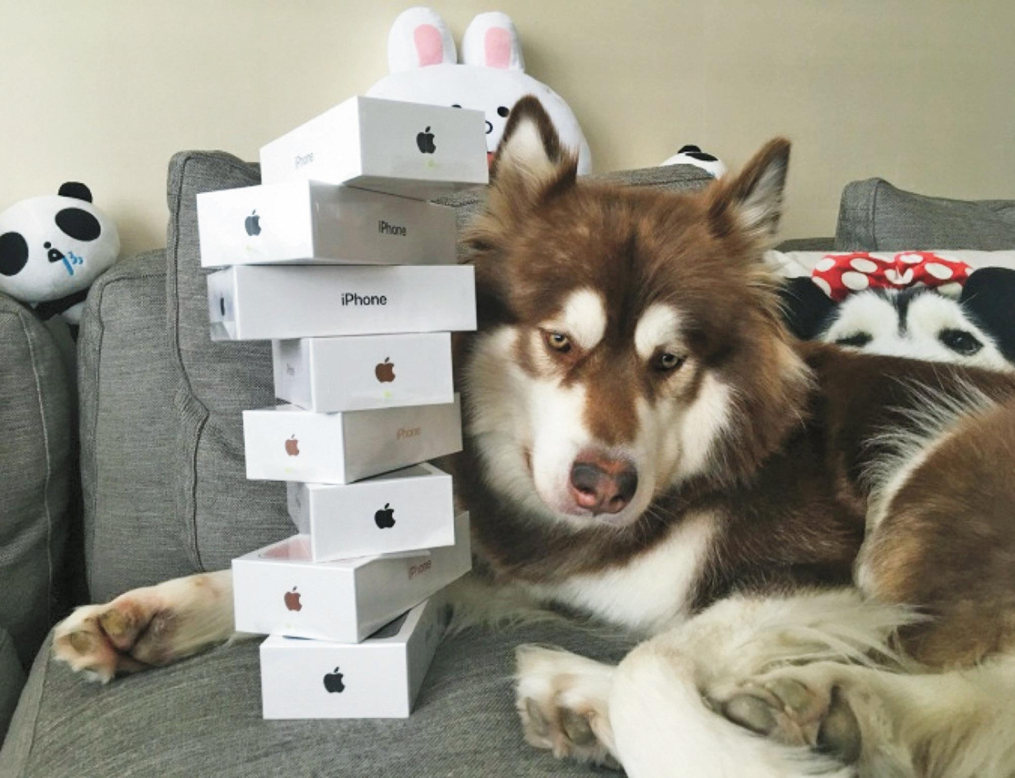 贈愛犬八台iPhone7