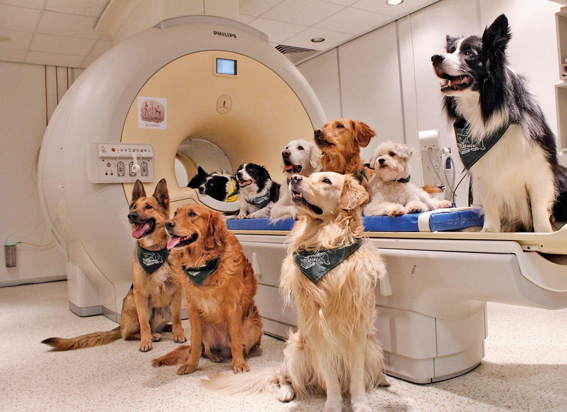 狗狗聽得懂人話