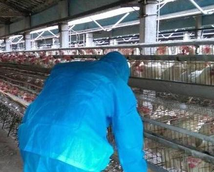 本澳今年沒有進口台灣雞蛋