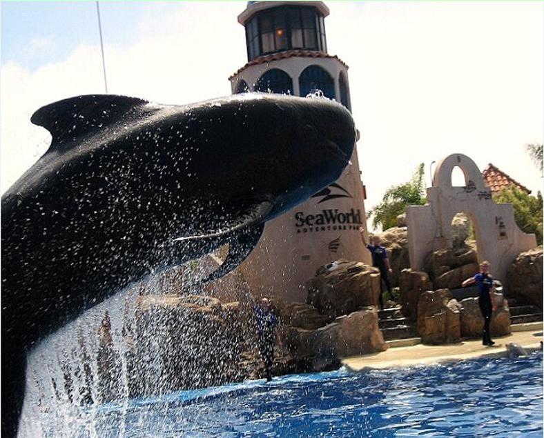 美海洋世界最老領航鯨逝世
