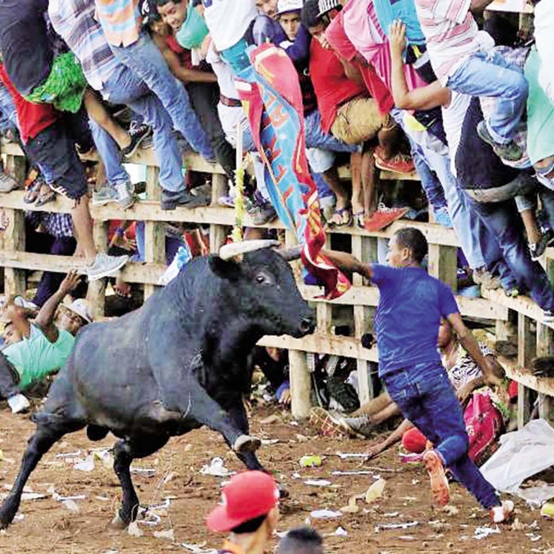 哥倫比亞新年鬥牛意外