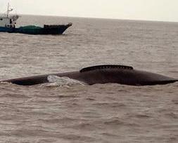 江蘇漁船相撞九人墜海
