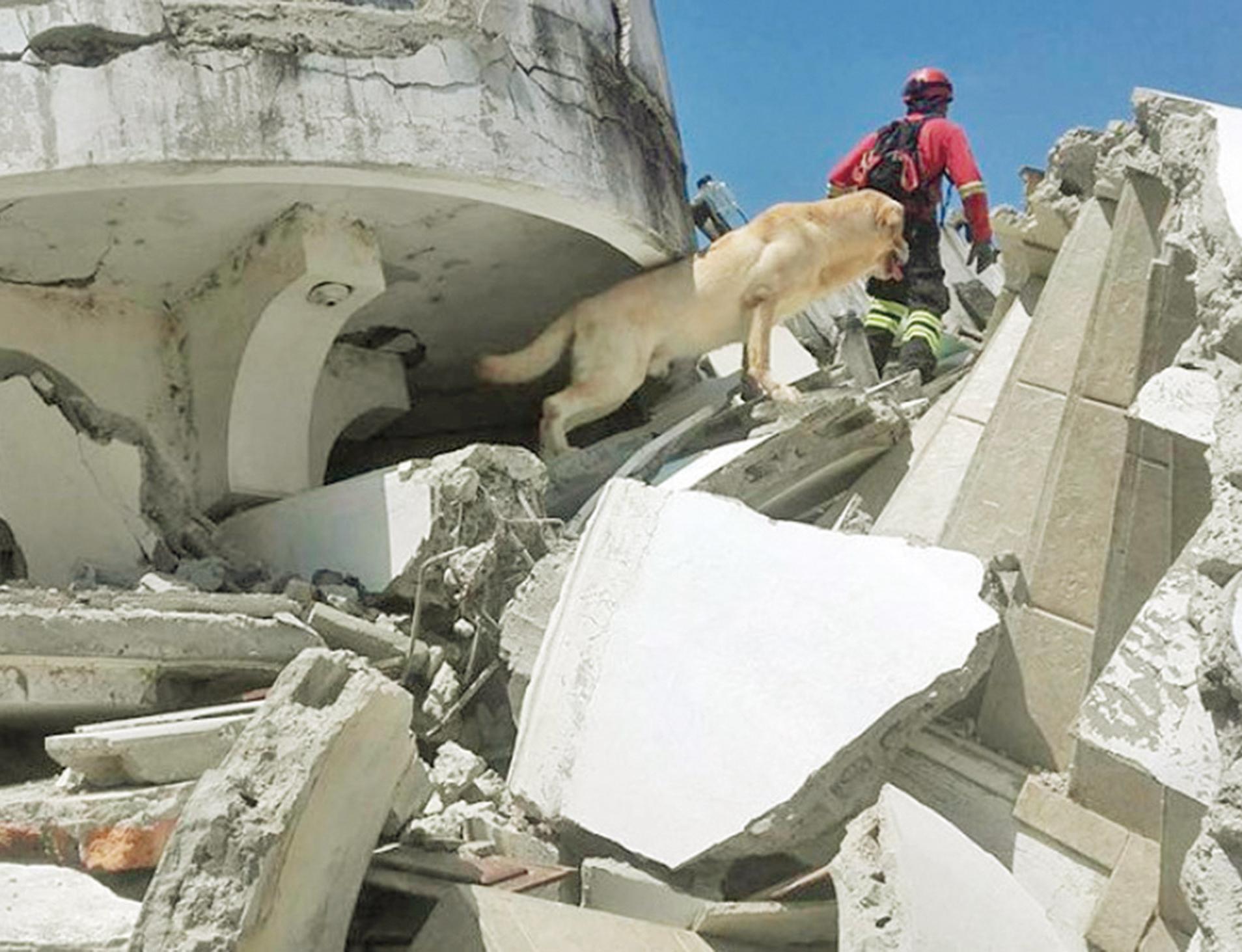 厄瓜多爾搜救犬殉職