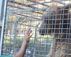 男童動物園餵熊慘遭咬甩前臂