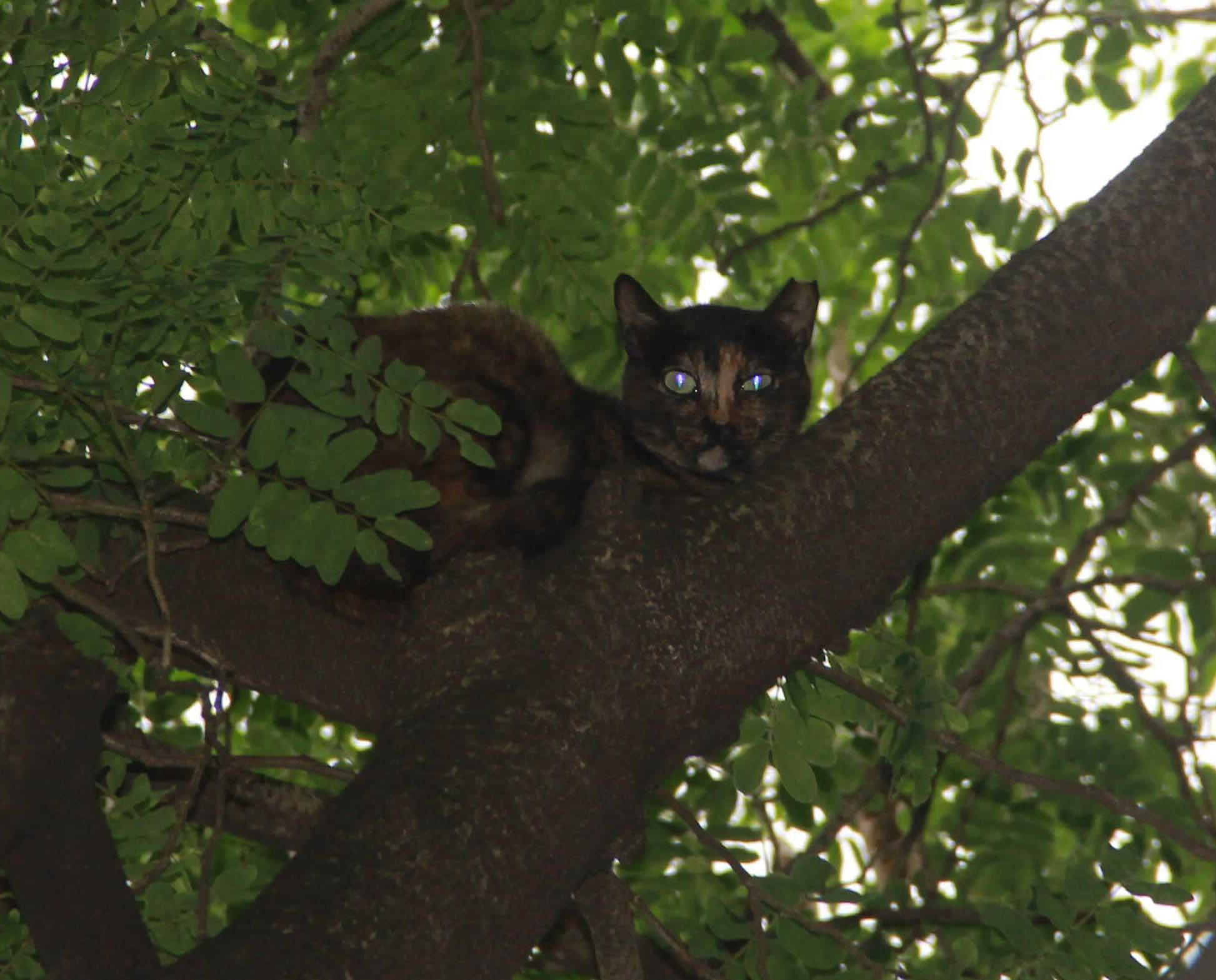 有片!百厭貓咪樹上拒被救