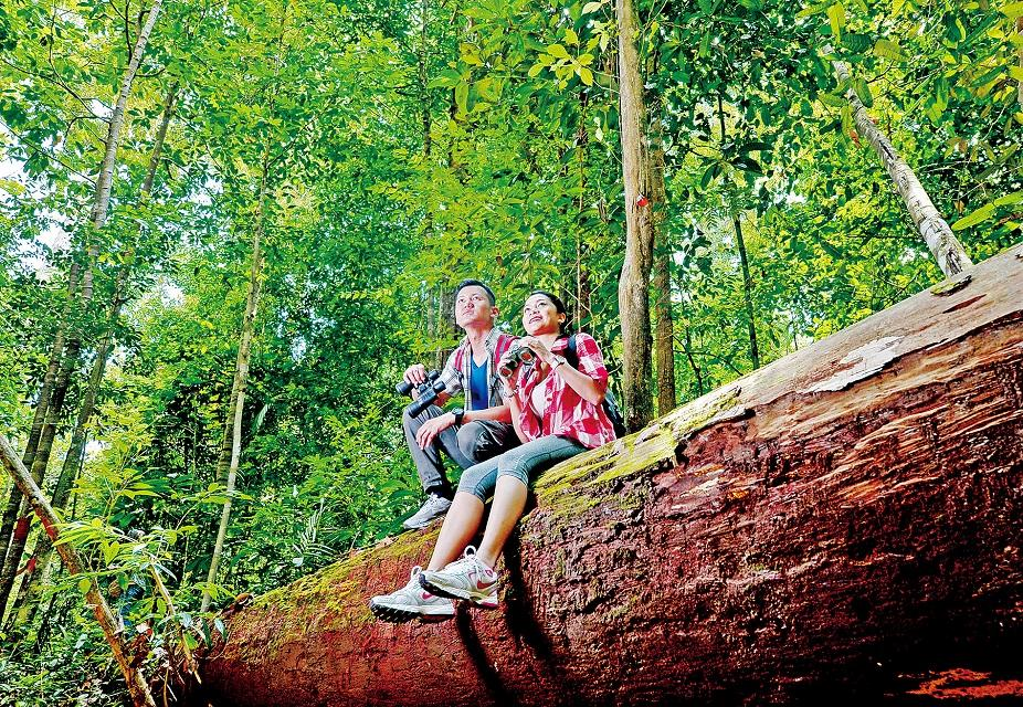 砂勞越 熱帶雨林生態