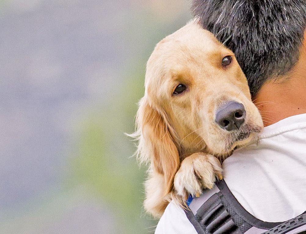 80%狗狗不喜歡抱抱