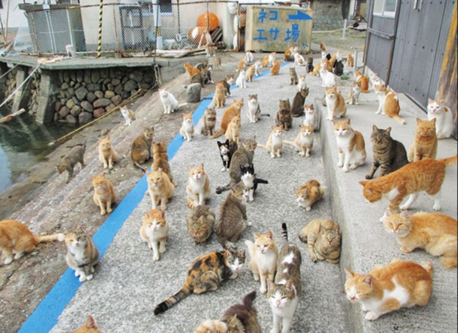 愛心貓糧逼爆倉庫