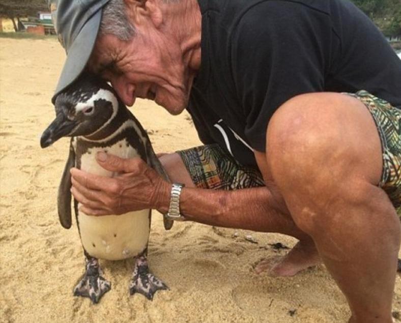小企鵝每年返嚟尋親