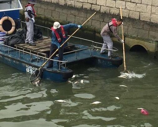 內港及海洋花園淺灘現大量死魚