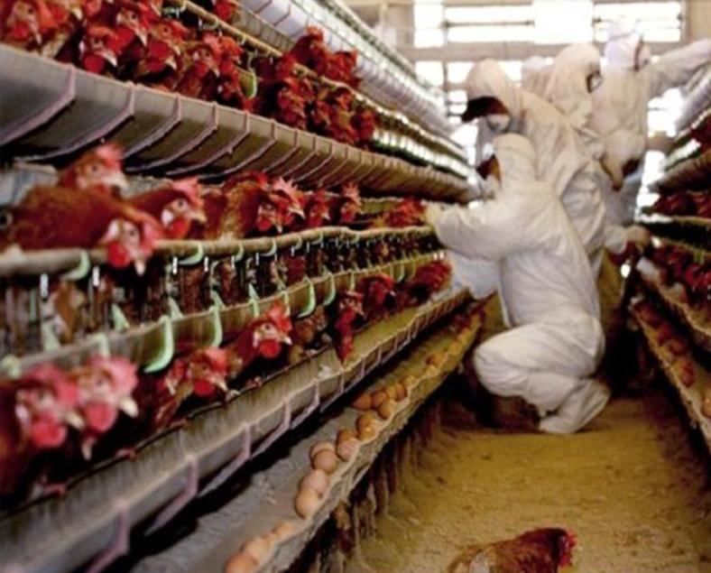 韓國禽流感警報上升至最高