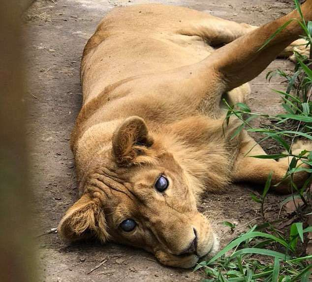 菲動物園被轟虐待動物