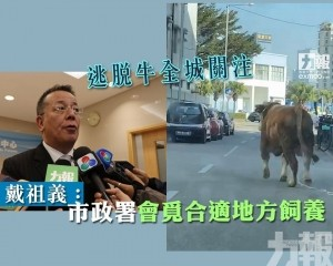戴祖義:市政署會覓合適地方飼養