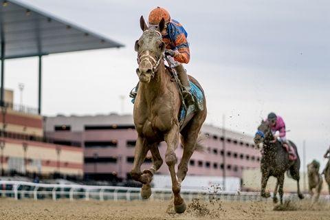 發展賽馬及體育彩票等項目