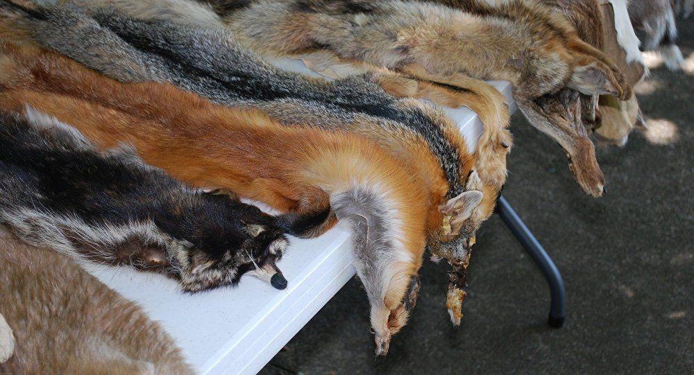 挪威2025年前關閉全國皮草養殖場